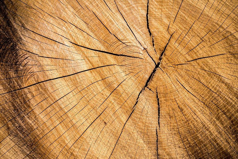 De sterkste bomen in de wereld